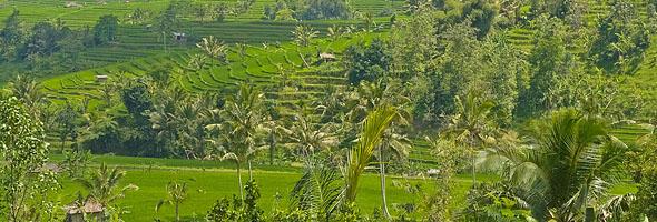 Jatiluwah Rice Terraces, Bali, Indonesia. Photo: © Asian Scientist Magazine.